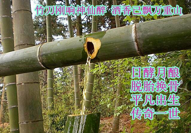 新鲜竹筒酒 原生态活竹酒 农家毛竹酒 绿色健康产品