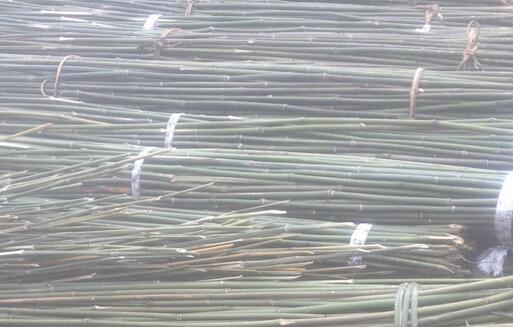 海量批發菜架竹毛竹梢農用竹竿物美價廉